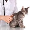 Ветеринарные клиники в Стрежевом